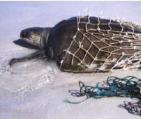 Dumped Fishing Nets, Known as 'Ghost Nets', are an Environmental Problem